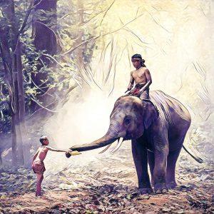 Niño dando de comer a un elefante